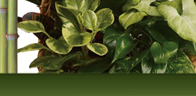 plantes-vertes
